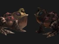 Image de grenouilles
