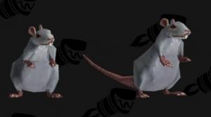 Image de rats