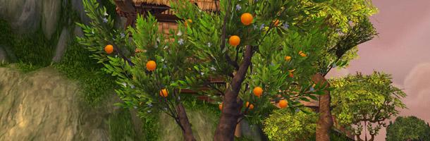 Un oranger impérial