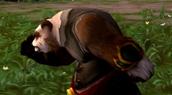 Danse des Pandarens en vidéo