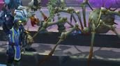 Un Dk se lie avec une araignée