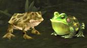 Les grenouilles bénéficient d'un lifting