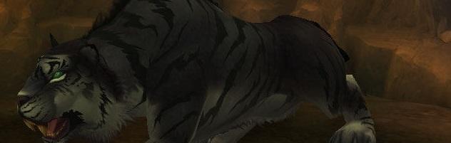 Saurez-vous vaincre ce tigre couleur ébène ?