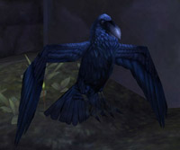 Corbeau œil sombre de l'Île du tonnerre