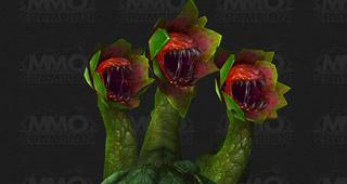 Une plante carnivore tricéphale