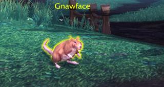 Un rat très gourmand