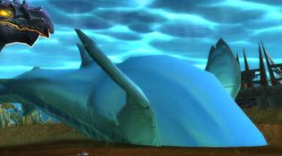 Ce requin-baleine apprend le dos crawlé