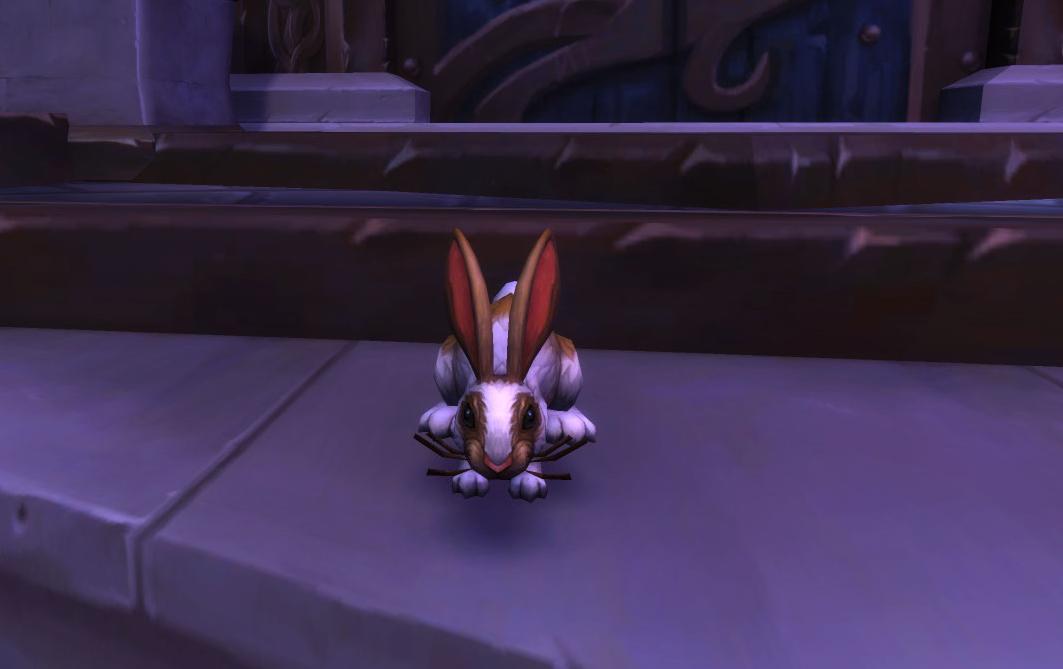 Sortez votre lapin du printemps et attendez qu'il trouve un autre lapin