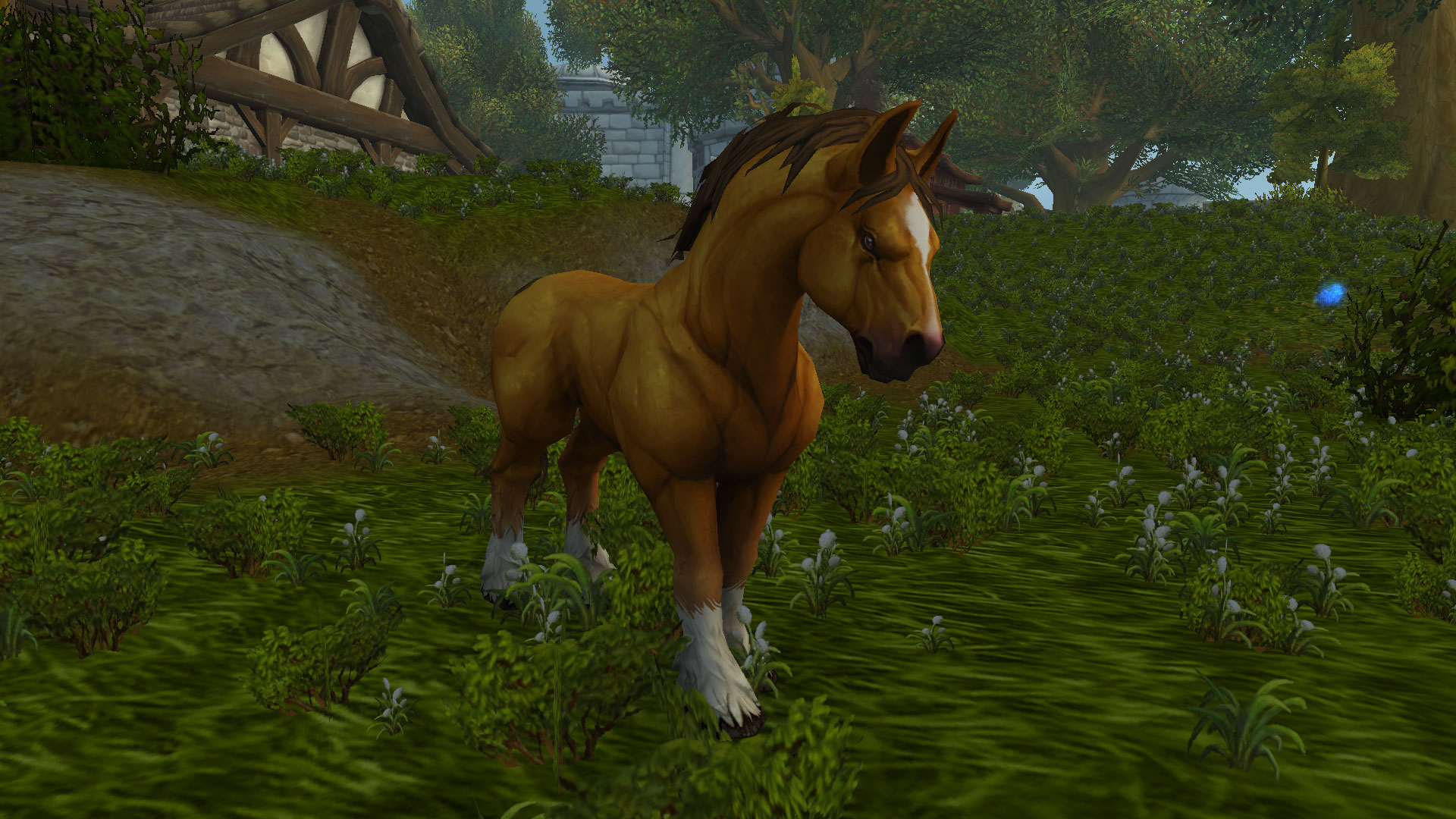 Cheval des montagnes - Battle for Azeroth