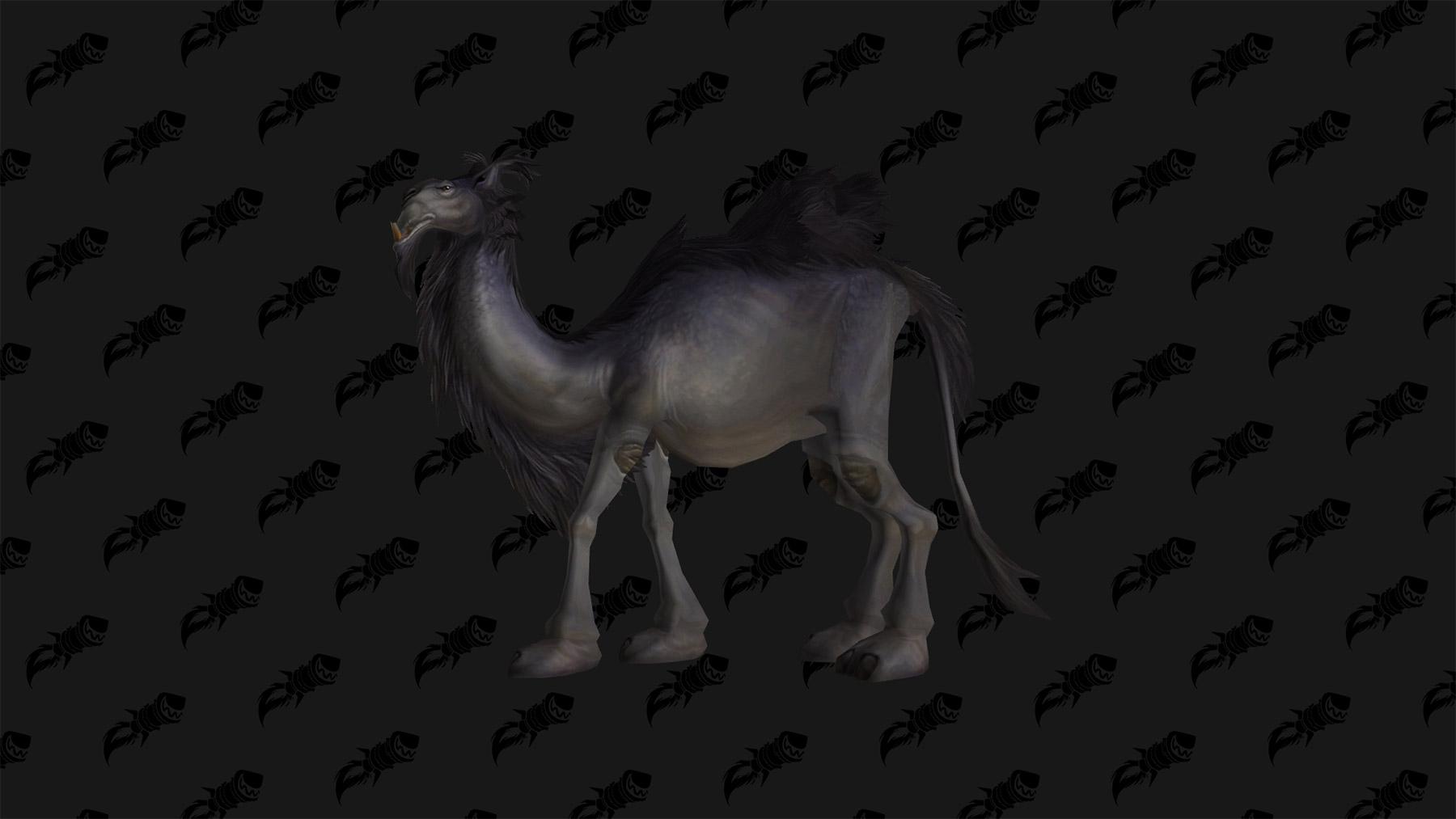 La mascotte chameau pygmée
