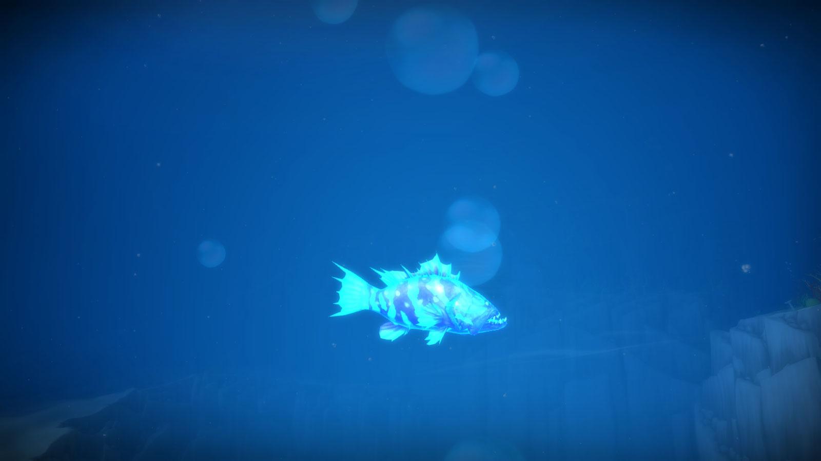 Mérou luminescent