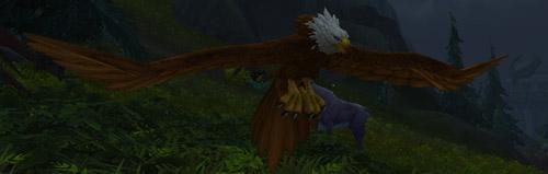 Les grands aigles vivent sur les îles Brisées