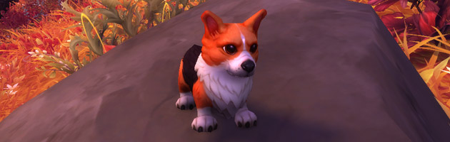 Jeune corgi, la nouvelle mascotte de World of Warcraft